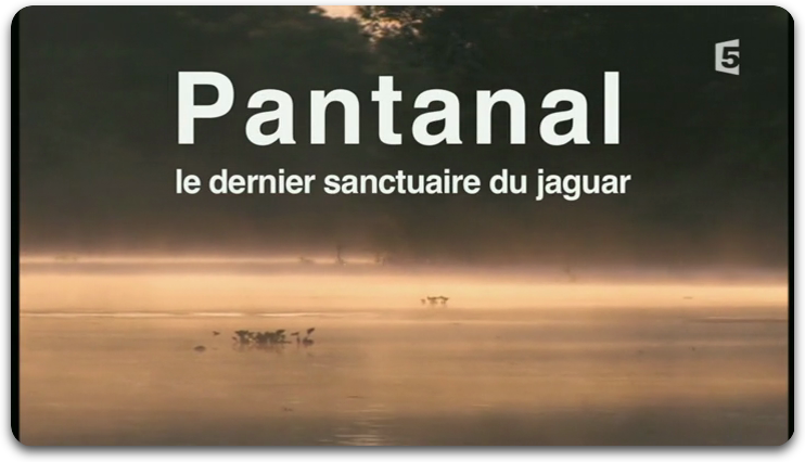 [Multi] Pantanal Le Dernier Sanctuaire Du Jaguar [FRENCH | PDTV]