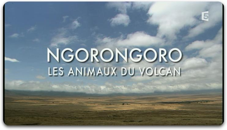 [MULTI] Ngorongoro Les Animaux Du Volcan  [FRENCH | PDTV]