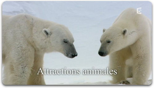 Attractions Animales