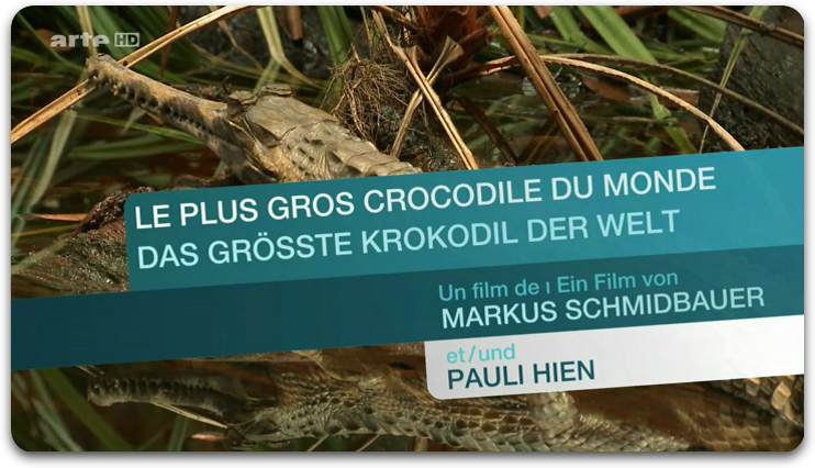Le Plus Gros Crocodile Du Monde