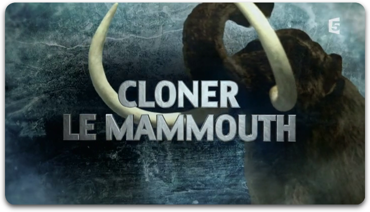 Cloner Le Mammouth