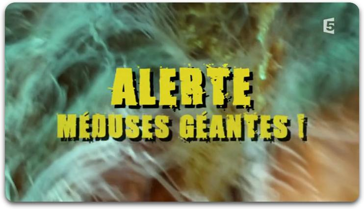 [Multi] Alerte Méduses Géantes ! [FRENCH | PDTV]