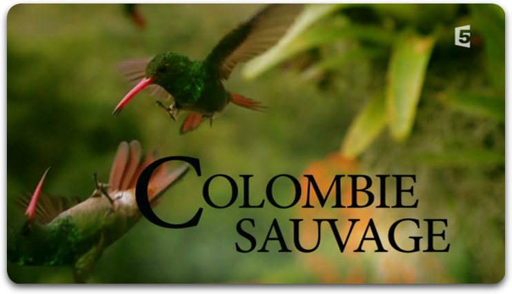 Colombie Sauvage