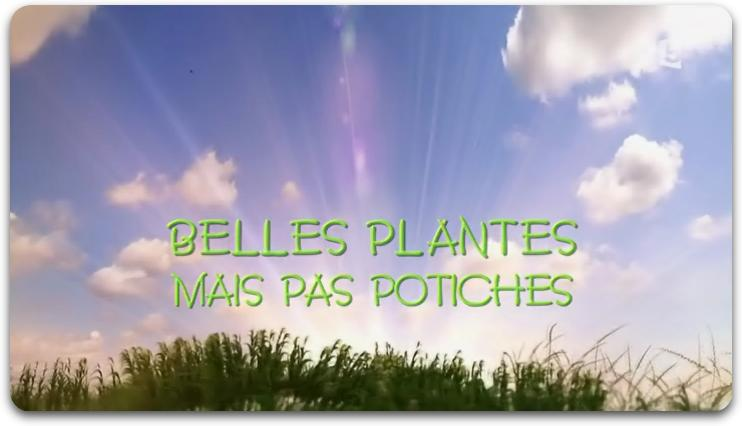 Belles Plantes Mais Pas Potiches [FRENCH | HDTV] [MULTI]