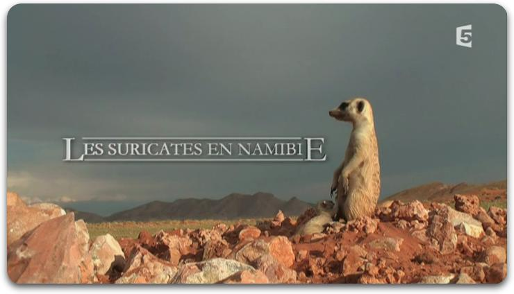 [Multi] Les Suricates En Namibie [FRENCH | HDTV]